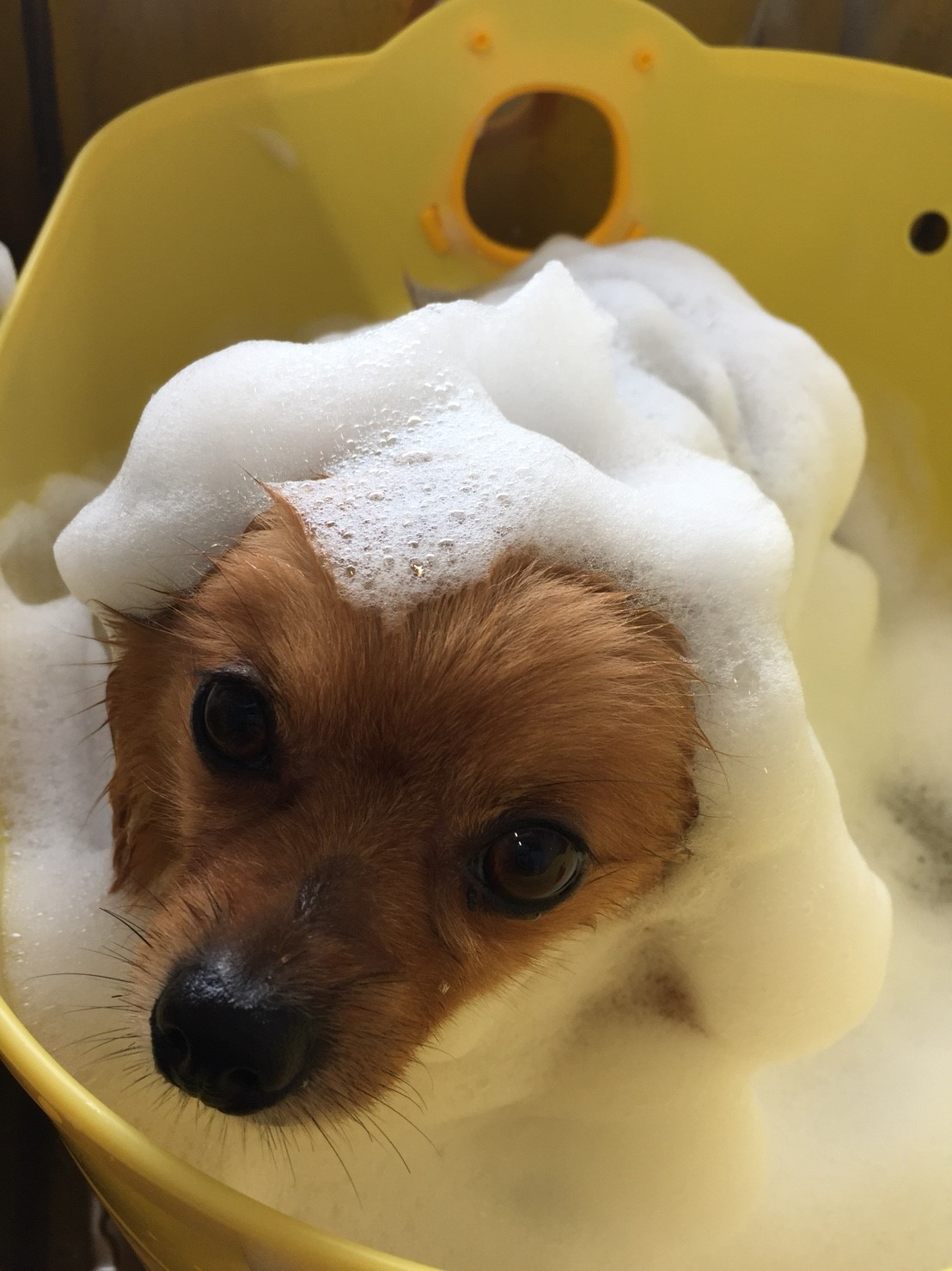 ホイップアロマバス温浴